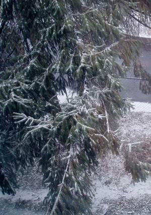 First_snow4